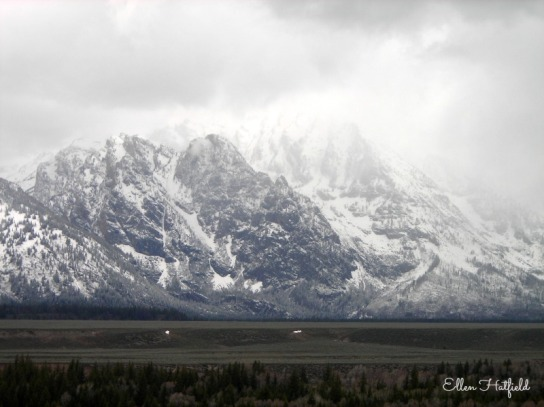 RTD4 Grand Tetons