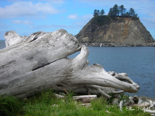 RTFD Driftwood
