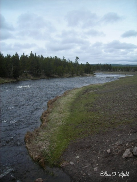 YNP Firehole River