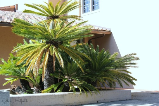 Cool looking palm tree