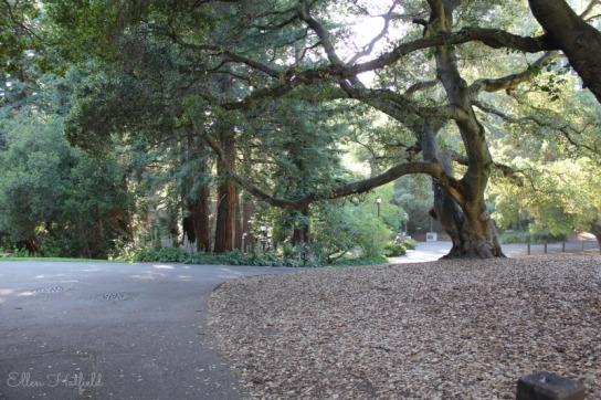 Trees! Many of the walk ways were amongst trees. I felt like I was walking through the woods.