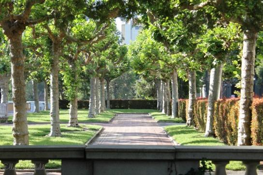 Tree-lined walkway near the clock tower.