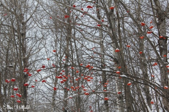 Berries with snow