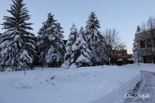 UMD Snowy trees