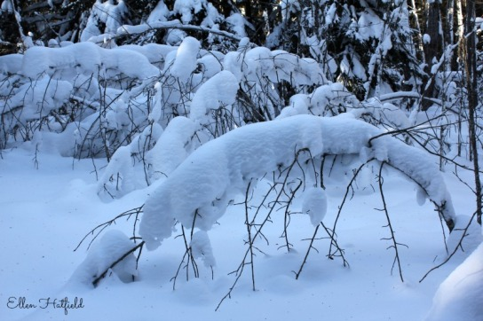 Bent snowy trees